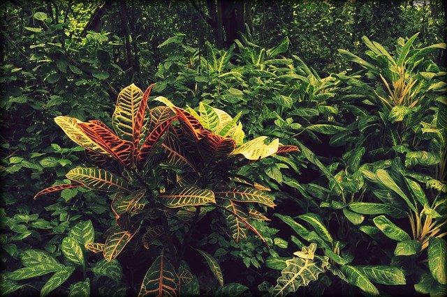 jungle-3688182_640